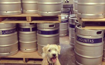 Our First Trip to Lagunitas Brewery in Petaluma...