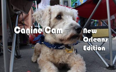 CANINE CAM THE NEW ORLEANS EDITION